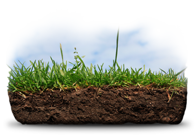 Turf Landscape Syracuse NY Wars: Protecting your second-biggest investment