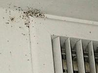 Bed Bugs Perimeter