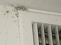 Bed Bug Room Inspection