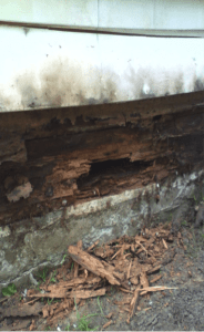 local home with damage from carpenter ants