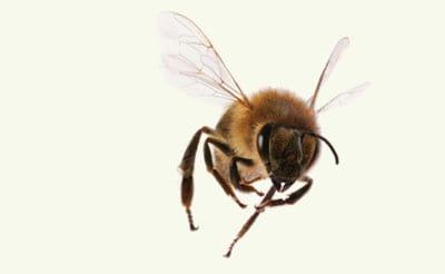 bee exterminators