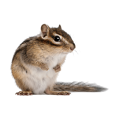 chipmunk pest control