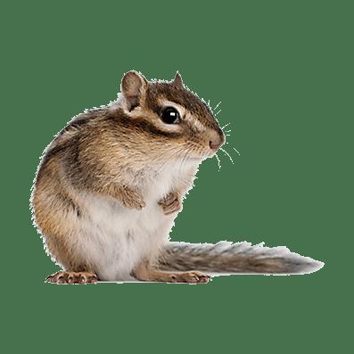 chipmunk pest control