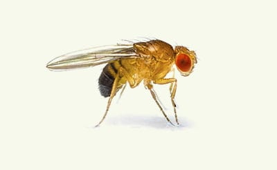 fruit fly exterminators