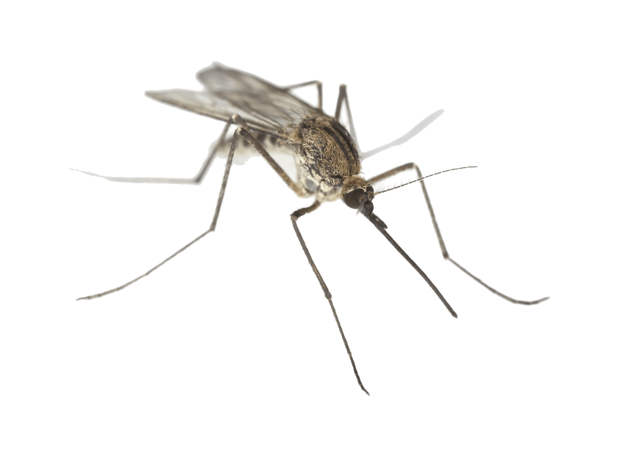 mosquito exterminators