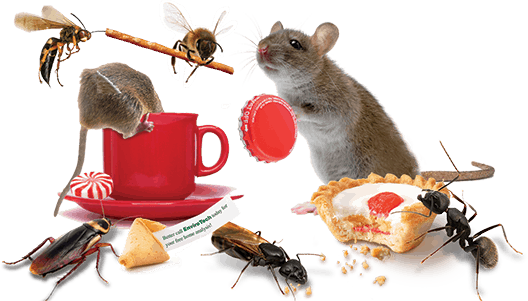 pest local to Albany - mice, ants, wasps, termites