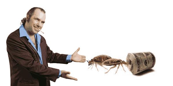 Hiring Bed bug Exterminators