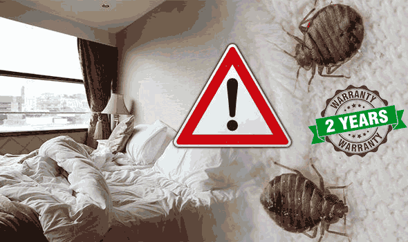 Rochester NY Bed Bug Hotels