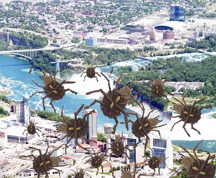 Bed Bugs Niagara Falls