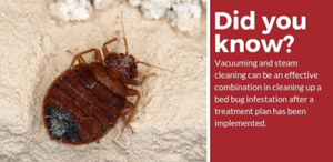 How to Clean Carpets With Bed Bugs
