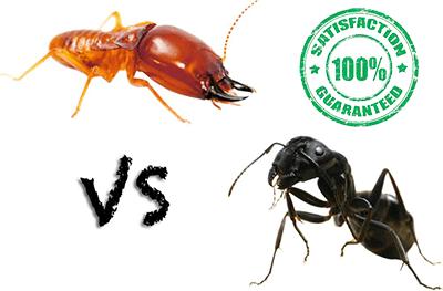 Rochester Carpenter Ants