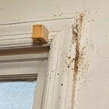 bed bugs hiding in window frame