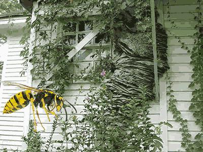 Bees Rochester NY