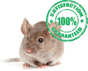 mice problem remediation