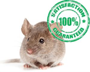 mice problem remediation