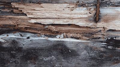 wood damage carpenter ants