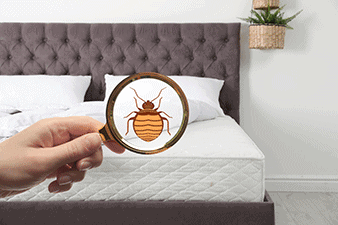 bed bugs in bed