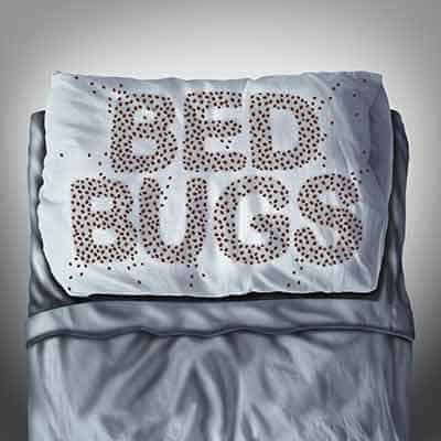 bed-bugs-come-from-motels