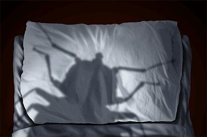 bed bug shadow