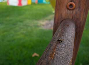 flying carpenter ant on a wooden fence