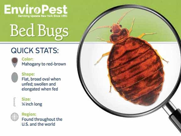 bed bug stats