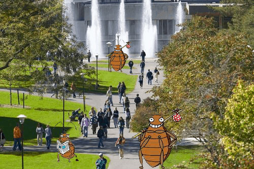 bed bugs at Ithaca College
