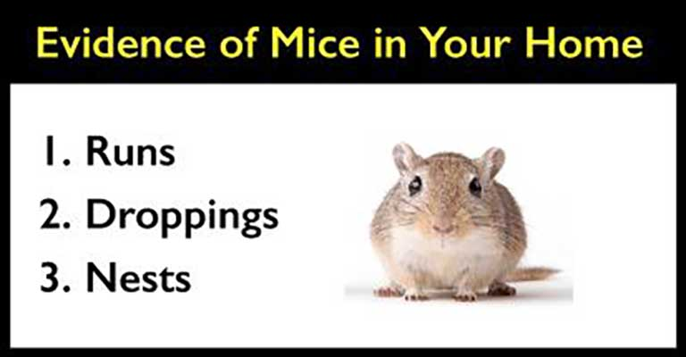 evidence of mice in your home graphic