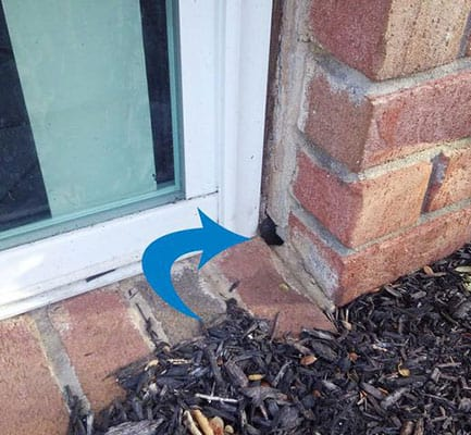 crack in foundation where mouse can enter home